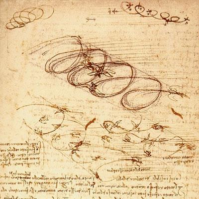 Зарисовки полёта птиц от Леонардо да Винчи