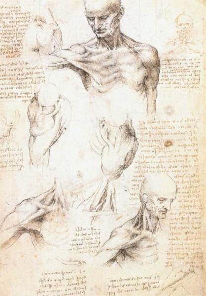 Эскизы анатомии человека Леонардо да Винчи 2