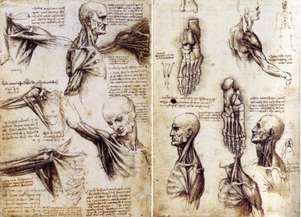 Эскизы анатомии человека Леонардо да Винчи